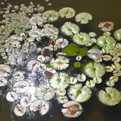 Jardim Botânico | Botanic Gardens