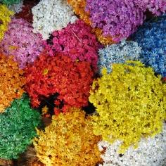 Flores do Cerrado | Cerrado Flowers