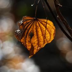 Outono | Autumn
